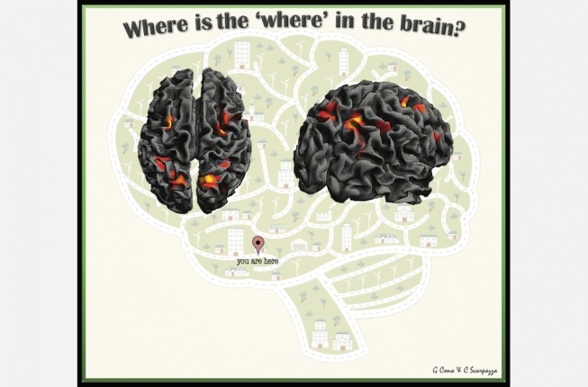 Collegamento a Human Brain Mapping journal