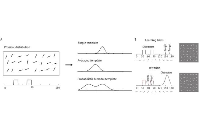 Collegamento a Rappresentazioni probabilistiche in memoria di lavoro visiva