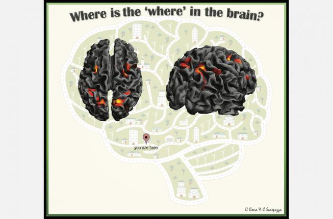 Collegamento a Human Brain Mapping